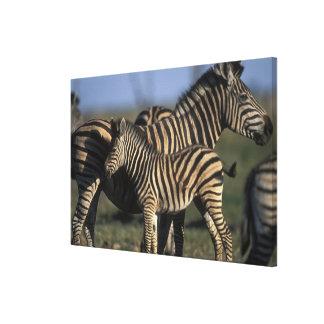 Africa, Botswana, Chobe National Park, Plains Canvas Print