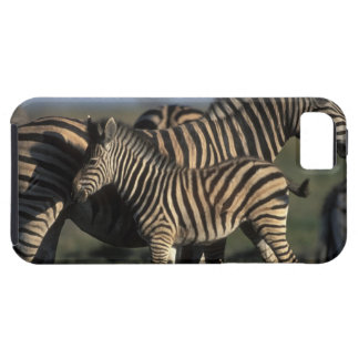Africa, Botswana, Chobe National Park, Plains iPhone 5 Covers