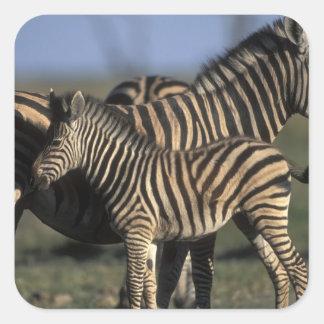 Africa, Botswana, Chobe National Park, Plains Square Sticker