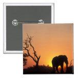 Africa, Botswana, Chobe National Park, Setting 2 Inch Square Button