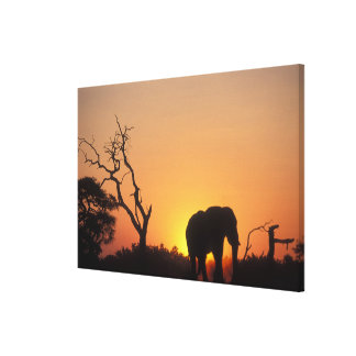 Africa, Botswana, Chobe National Park, Setting Stretched Canvas Prints
