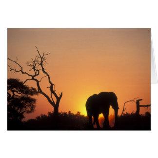 Africa, Botswana, Chobe National Park, Setting Card
