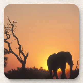 Africa, Botswana, Chobe National Park, Setting Drink Coaster