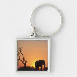 Africa, Botswana, Chobe National Park, Setting Keychain