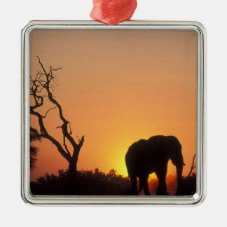Africa, Botswana, Chobe National Park, Setting Metal Ornament