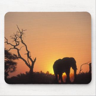 Africa, Botswana, Chobe National Park, Setting Mouse Pad