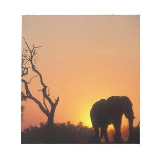 Africa, Botswana, Chobe National Park, Setting Notepad
