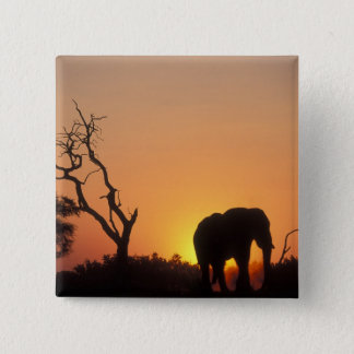 Africa, Botswana, Chobe National Park, Setting Pinback Button