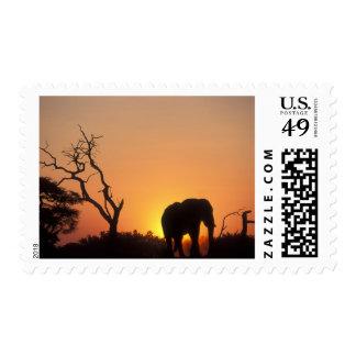 Africa, Botswana, Chobe National Park, Setting Postage