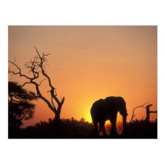 Africa, Botswana, Chobe National Park, Setting Postcard