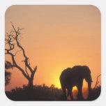 Africa, Botswana, Chobe National Park, Setting Square Sticker