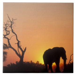 Africa, Botswana, Chobe National Park, Setting Tile