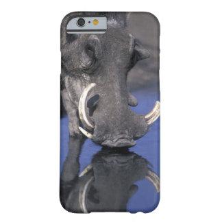 Africa, Botswana, Chobe National Park, Warthog Barely There iPhone 6 Case