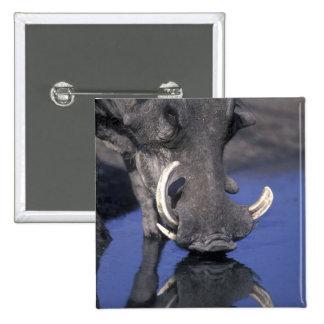 Africa Botswana Chobe National Park Warthog Pinback Button