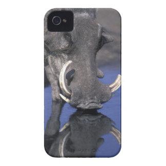 Africa, Botswana, Chobe National Park, Warthog iPhone 4 Cases