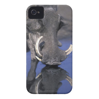 Africa, Botswana, Chobe National Park, Warthog iPhone 4 Case
