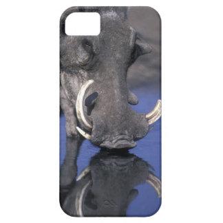 Africa, Botswana, Chobe National Park, Warthog iPhone SE/5/5s Case