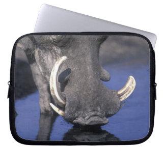 Africa, Botswana, Chobe National Park, Warthog Laptop Sleeve