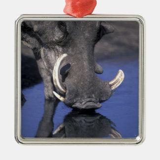 Africa, Botswana, Chobe National Park, Warthog Metal Ornament