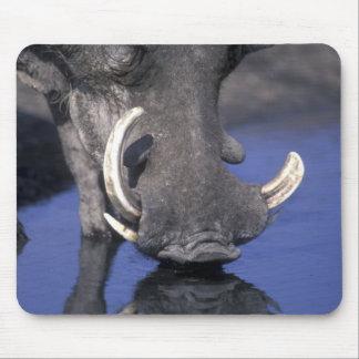 Africa, Botswana, Chobe National Park, Warthog Mouse Pad