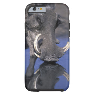 Africa, Botswana, Chobe National Park, Warthog Tough iPhone 6 Case