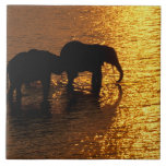 África, Botswana, delta de Okavango. Africano Azulejo Cerámica