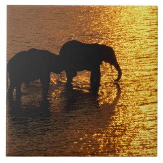 África, Botswana, delta de Okavango. Africano Azulejo Cuadrado Grande