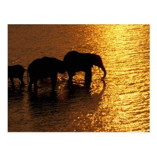 África, Botswana, delta de Okavango. Africano Postal