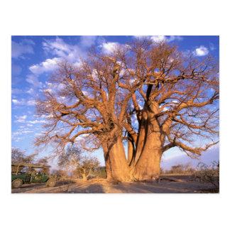 África, Botswana, delta de Okavango. Baobab Tarjetas Postales