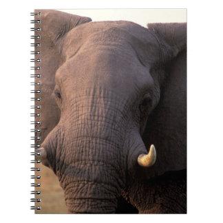 África, Botswana, delta de Okavango. Elefante Cuadernos