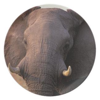 África, Botswana, delta de Okavango. Elefante Platos Para Fiestas