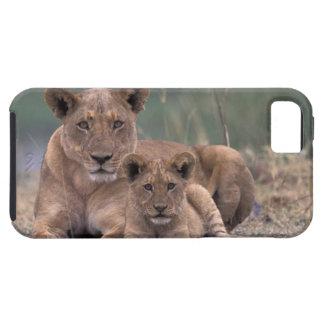 África, Botswana, delta de Okavango. Leones iPhone 5 Carcasa
