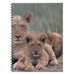 África, Botswana, delta de Okavango. Leones Spiral Notebooks