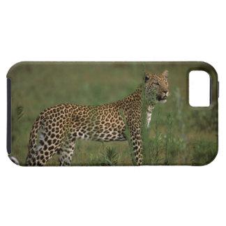 África, Botswana, delta de Okavango. Leopardo iPhone 5 Carcasa