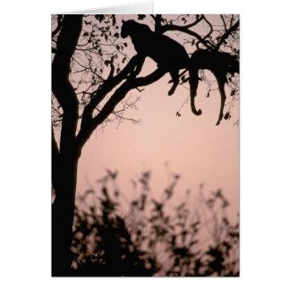 África, Botswana, delta de Okavango. Leopardo Tarjeton