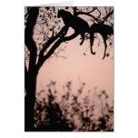 África, Botswana, delta de Okavango. Leopardo Tarjeta De Felicitación