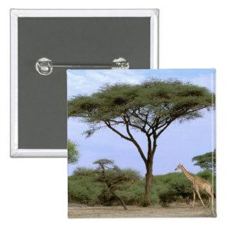 África, Botswana, delta de Okavango. Meridional Pin Cuadrado