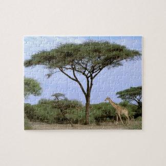 África, Botswana, delta de Okavango. Meridional Puzzle