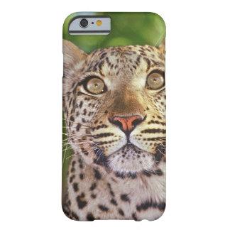 África, Botswana, delta de Okvango, leopardo Funda De iPhone 6 Barely There