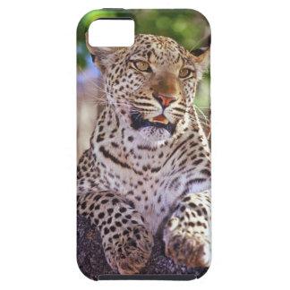 África, Botswana, delta de Okvango, leopardo iPhone 5 Carcasa