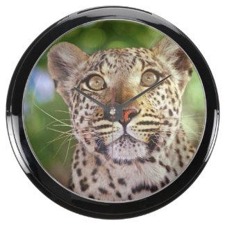 África Botswana delta de Okvango leopardo salva