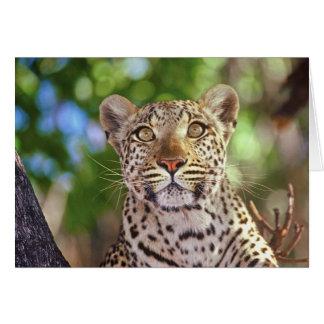 África Botswana delta de Okvango leopardo salva Felicitacion