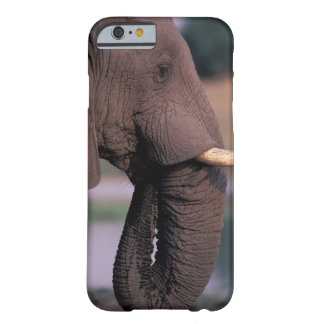 África Botswana Elefante Loxodanta Africana