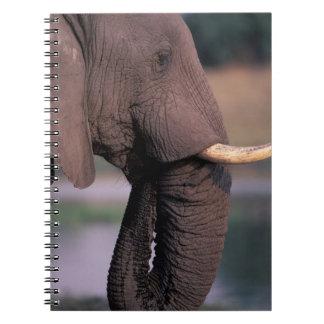 África, Botswana. Elefante (Loxodanta Africana) Libreta Espiral