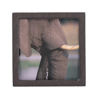 Africa, Botswana. Elephant (Loxodanta Africana) Gift Box