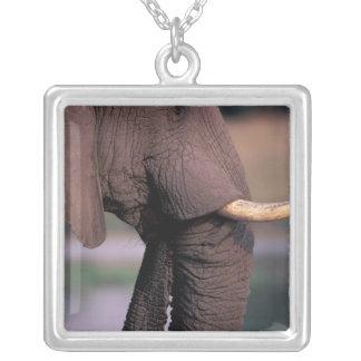 Africa, Botswana. Elephant (Loxodanta Africana) Square Pendant Necklace