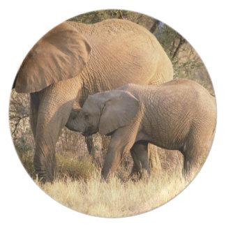 Africa, Botswana, Moremi. Elephant nursing Dinner Plate