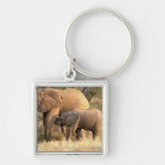 Africa, Botswana, Moremi. Elephant nursing Keychain