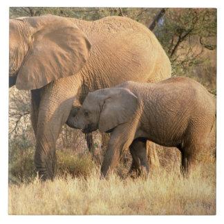 Africa, Botswana, Moremi. Elephant nursing Tile