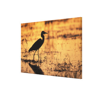 Africa, Botswana, Moremi Game Reserve, Canvas Print